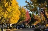 Autumn in Willow Glen - October, 2012
