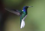 Costa Rica: Rincon de la Vieja
