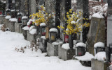 Winter Scenery in Cemetery Baumgarten,Vienna