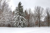 Winter in Emery Park
