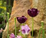 Botanical Gardens -- April 2013
