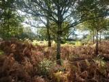 Autumn really suits bracken