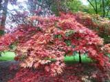 Westonbirt Arboretum, Gloucestershire 2012