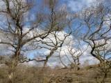 Lovely tree shapes
