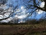 Hummocky field