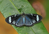 Butterfly-NWC.jpg