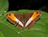 Butterfly-NWC3.jpg