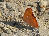 Butterfly-NWC4.jpg
