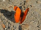 Butterfly-NWC5.jpg