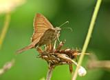 Butterfly-NWC8.jpg