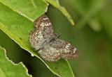 Butterfly-NWC9.jpg
