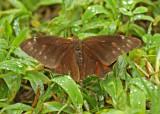 Butterfly-San-Isidro8.jpg