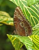 Butterfly-Milpe.jpg