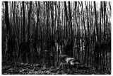 La forêt inondée