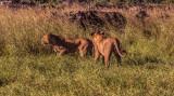 Botswana, southern Africa