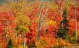 New England Fall Foilage 2012