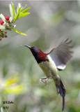Bird in Flight (Actions)