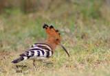 Birds of India Dec. 2012