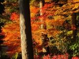 Japan November 2012 - 6 galleries