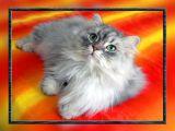 Psycedelic cat...