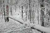 Winter West Virginia Scenery
