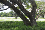 Trees with graves in the background.
