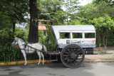 A horse and buggy for tourists.
