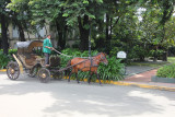 Horse and buggy at Plaza Armas at Fort Santiago.
