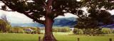 Tree @ Bassenthwaite Lake
