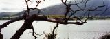 old tree  @ Bassenthwaite Lake