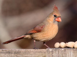 Birding 2012-13