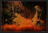 Weird Scene inside the Forbidden Forest.