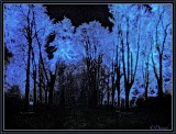 The Wood Enchanted by the Songs of the Stars.