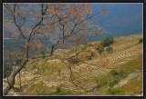 Terrace Fields in Eastern Bhutan.
