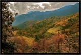 Pines and larches cover the hills in Central Bhutan.