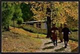 An Autumn Walk in Paro Dzong Garden.
