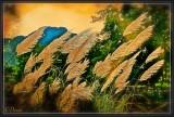 The Fields of Xa-Ne.