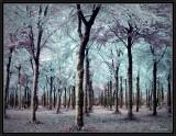 The Elves' Wood.