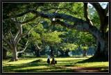 The Narrow Path under the Banyan Trees. Pindaya.