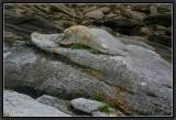 Three Stone Tales - 3-/ The Alligator.