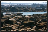 The Coast of Legends. (Meneham).