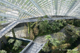 Inside Cloud Forest