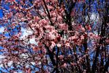 Spring 2013 in Queens 004.jpg