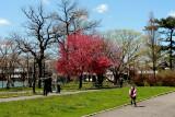 Spring 2013 in Queens 018.jpg