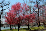 Spring 2013 in Queens 019.jpg