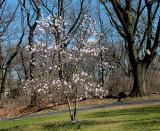 Spring 2013 in Queens 024.jpg