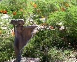 Garden statuary at Taliesen West