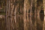 hadera_forest_pond