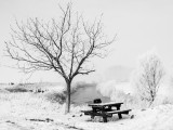 Kampen (Vogelwaarde) in winter