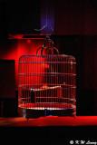 Birdcage DSC_9006
